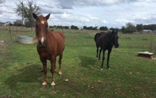 Rescue Horse Strikes Gold